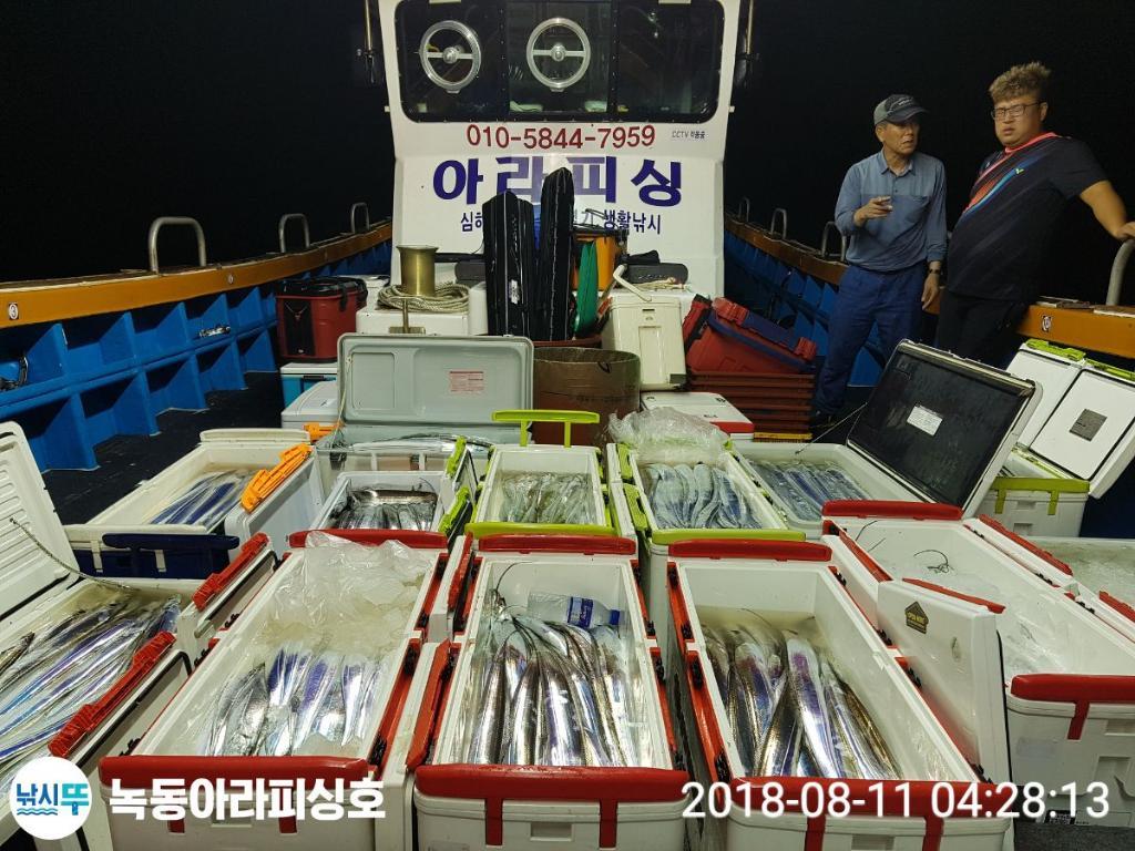 고흥녹동 아라피싱 갈치조황 8월10일